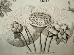 British Herbal 1758