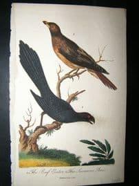 After George Edwards C1800 Hand Col Bird Print. Bee Eater, Savanna Ani