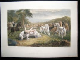 After John Herring C1870 Hand Col Print. Mazeppa. Horse Print