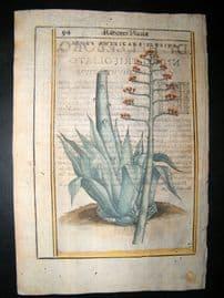 Aldini & Castelli 1625 Hand Col Botanical Print. Aloes Americana Florida