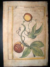 Aldini & Castelli 1625 Hand Col Botanical Print. Fructus Maracot Fruit