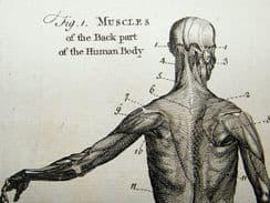 Anatomy/Medical