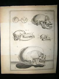 Anatomy Print 1768 Antique Engraving. Skulls