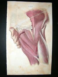 Anatomy Print 1826 Folio Hand Col. John Lizars
