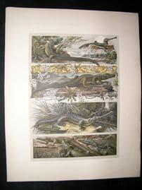 Anton Seder 1896 LG Folio Art Nouveau Print. Aligator Crocodile