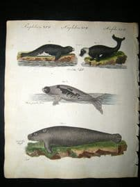 Bertuch 1804 Hand Colored Print. Seals & Walrusses