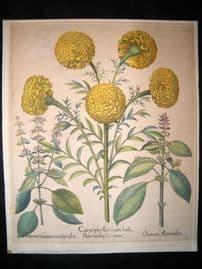 Besler 1613 LG Folio Hand Colored Botanical Print.  Carnations.