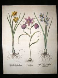 Besler 1713 LG Folio Hand Colored Botanical Print. Frittillaria, Narcissus