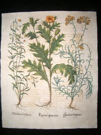 Besler 1713 LG Folio Hand Colored Botanical Print. Mexican Poppy