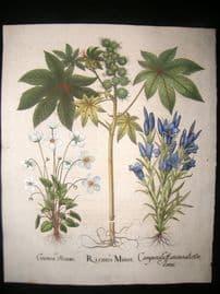 Besler 1713 LG Folio Hand Colored Botanical Print. Ricinus Minor, Castor Bean, etc