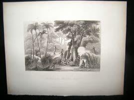 Brazil 1847 Antique Print. A Scene in the Brazillian Forest