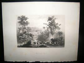 Brazil 1847 Antique Print. Travels in the Brazils
