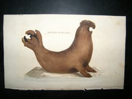 Brightly 1811 Antique Hand Col Print. Bottle Nose Seal