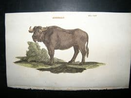 Brightly 1811 Antique Hand Col Print. Buffalo