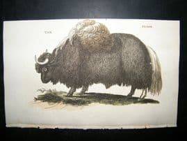 Brightly 1811 Antique Hand Col Print. Yak