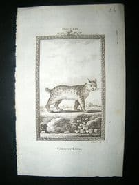 Buffon: 1785 Candian Lynx, Antique Print