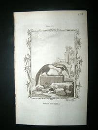 Buffon: 1785 Great Ant Eater, Antique Print