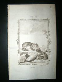 Buffon: 1785 Paca, Antique Print