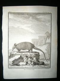 Buffon: C1770 Armadillo, Antique Print