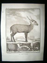 Buffon: C1770 Deer Pig, Antique Print