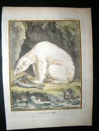 Buffon C1775 Antique Hand Col Print. Polar Bear