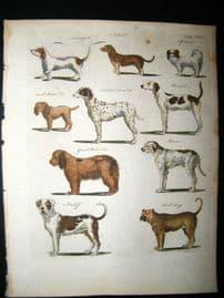 C1790 H/Col Print. Canis. Turnspits, Dalmation, Spaniel, Bull Dog, Mastiff