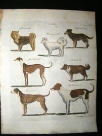 C1790 Hand Col Print. Canis. Greyhounds, Siberian, Danish, Pomeranian Dogs