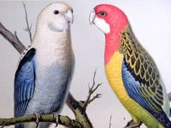 Cassells Canaries & Cage Birds