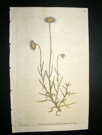 Curtis 1787 Hand Col Botanical Print. Bristly Leaved Aster #33,