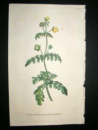 Curtis 1787 Hand Col Botanical Print. Pinnated Slipper-Wort #41,