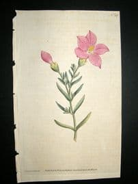 Curtis 1787 Hand Col Botanical Print. Shrubby Chironia #37,