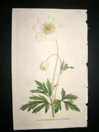Curtis 1787 Hand Col Botanical Print. Snowdrop Anemony #54,