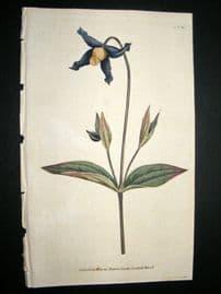 Curtis 1787 Hand Col Botanical Print. Virgin's-Bower #65,
