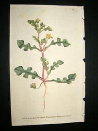 Curtis 1788 Hand Col Botanical Print. Jag-Leaved Fig marigold #67,