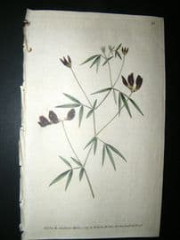 Curtis 1789 Hand Col Botanical Print. Black Flower'd Lotus 79