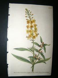 Curtis 1789 Hand Col Botanical Print. Bulb Bearing Loosestrife 104