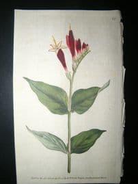 Curtis 1789 Hand Col Botanical Print. Maryland Spigelia or Worm-Grass 80