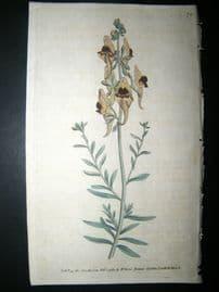 Curtis 1789 Hand Col Botanical Print. Melancholy or Black Flower'd Toad Flax 74