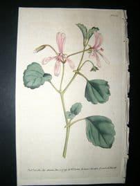 Curtis 1789 Hand Col Botanical Print. Sorrel Crane's Bill 103