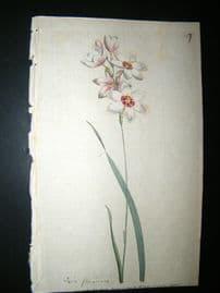 Curtis 1790 Hand Col Botanical Print. Blending Stalk'd Ixia 127