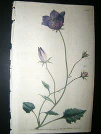 Curtis 1790 Hand Col Botanical Print. Carpatian Bell-Flower 117