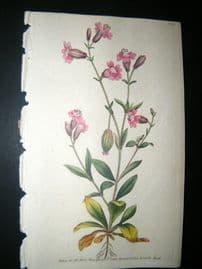 Curtis 1790 Hand Col Botanical Print. Pendulous Catchfly 114