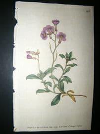 Curtis 1790 Hand Col Botanical Print. Purple Alyssum 126