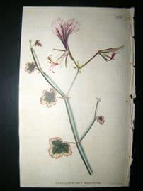 Curtis 1790 Hand Col Botanical Print. Square Stalked Geranium 136