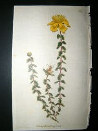 Curtis 1790 Hand Col Botanical Print. Warty St. John's Wort 137