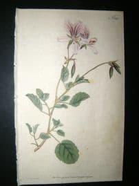 Curtis 1791 Hand Col Botanical Print. Birch Leav'd Crane's Bill 148