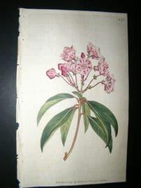 Curtis 1791 Hand Col Botanical Print. Broad Leav'd Kalmia 175