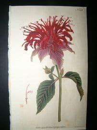 Curtis 1791 Hand Col Botanical Print. Crimson Monarda 145