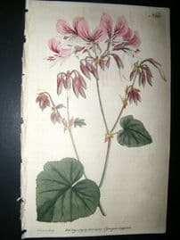 Curtis 1791 Hand Col Botanical Print. Heart Leaved Geranium 165