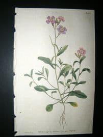 Curtis 1791 Hand Col Botanical Print. Mediterranean Stock 166